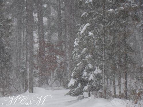 Snowy day2