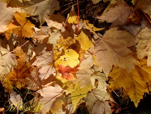 leafconfetti